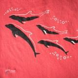 FishAreFriends_Dolphin_DSC2394