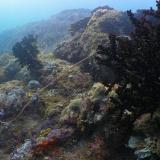 Longline unter Wasser - das passiert danach