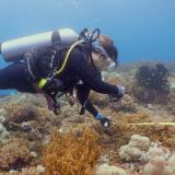 Sam untersucht Korallen