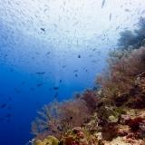 Pulau Pef, Raja Ampat-18