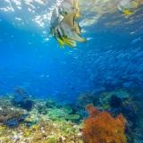Pulau Pef, Raja Ampat-20