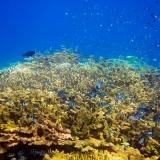 Pulau Pef, Raja Ampat-4