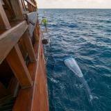 Mikroplastik Trawling