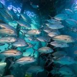Pulau Pef, Raja Ampat-15