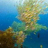Pulau Pef, Raja Ampat-16