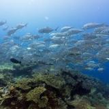 Pulau Pef, Raja Ampat-26