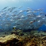 Pulau Pef, Raja Ampat-27